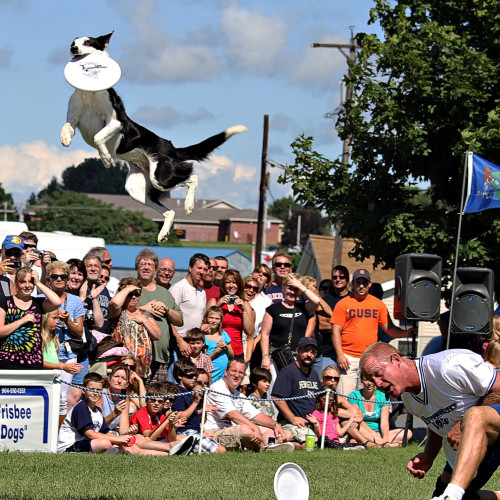 Zorra – 2014 Overall World Disc Dog Champion